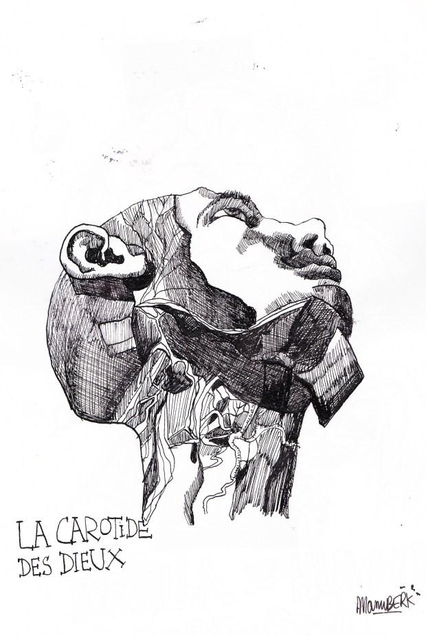 anatomik (2)